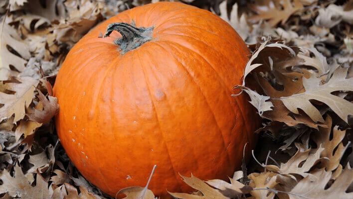 Pumpkin and Fall Leaves