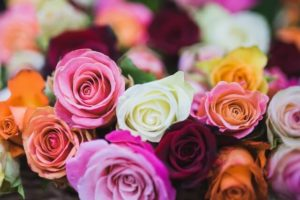 Holiday Flower Sale
