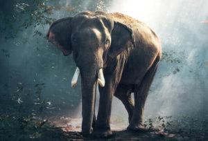 White Elephant Raffle