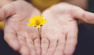 Nonprofit Organizations Flower in Hands